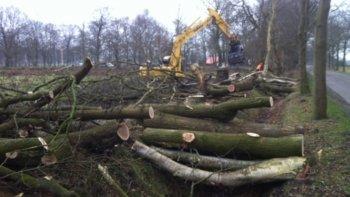 Bomen Hitlandselaan worden toch gekapt!